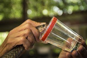 Od zmijskog otrova napravili lepak koji zaustavlja krvarenje