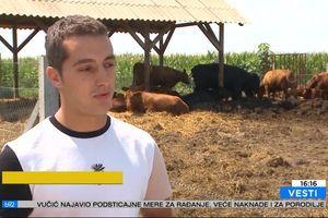 Stek angusa najcenjeniji – koliko grla tog govečeta ima u Srbiji