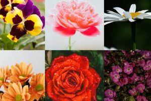 Oblíbená květina prozradí vše o vaší ženskosti a jak na vás muži nahlížejí. Jakou zvolíte?