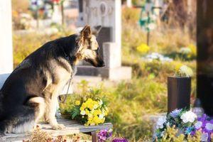 Pes navštěvuje hrob svého páníčka i několik let po jeho smrti. Dojemný příběh o lásce, kterou ani čas nezlomí