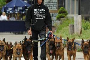 Na první pohled jen venčí svou smečku psů, ale sleduje je celá ulice. Jde totiž o zaříkávače psů a dělá s nimi něco zcela jiného