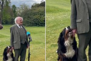 NAJSLAĐI TANDEM! Irski predsednik i njegov pas su pravi HIT na Internetu! (VIDEO)