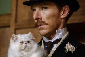 Ma már ennél jobb nem lesz: Benedict Cumberbatch és cuki cicák egy helyen