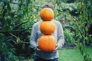 ZDRAVO, BUČE: Začenja se sezona plodov, ki bi jih morali pogosteje uvrstiti na jedilnik