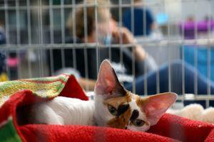 """""""V prihodnje bi bilo smotrno premisliti o davku na domače hišne živali"""""""