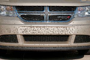 Ostaci insekata na kolima: Odmah ih UKLONITE da ne biste plaćali štetu!