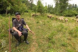 Pirotski master pastir: Miša je uz ovce spremio master studije i položio stručni ispit za kustosa