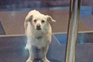 Pas je postao hit na internetu jer je za svog bolesnog vlasnika uradio nešto neverovatno