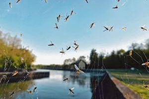 U Srbiji registrovan VIRUS ZAPADNOG NILA kod komaraca