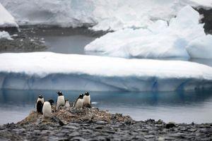 """""""Prestanite da kukate ja sam u karantinu na brodu kod Antarktika"""""""