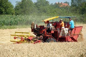 PRINOS BOLJI OD OČEKIVANOG Žetva pšenice je pri kraju, poljoprivrednici zadovoljni