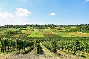 POPIS VINARA I VINOGRADARA Svi koji prodaju grožđe moraju da se upišu registar