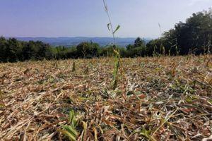 Kako neki poljoprivrednici pokušavaju da nasamare nadležne i dobiju subvencije?