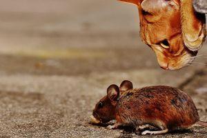 VIC DANA Sreli se američki, ruski i srpski miš na pogrebu francuskog miša...