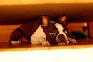 SIGNALI DA MI NIJE DOBRO: Zbog ove 4 situacije psi istinski pate