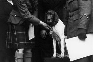 A kutya, aki a második világháború egyetlen négylábú hadifoglya volt: többször is a legénység védelmére kelt