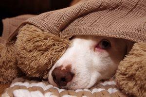 Fél a kutyád a viharban? Így nyugtasd meg hatékonyan