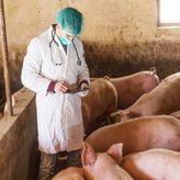 ΠΟΥ: Νέο στέλεχος γρίπης των χοίρων