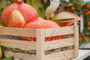 PREPORODIĆETE SE! Nekoliko jednostavnih SAVETA kako da sprovedete jesenji DETOKS i OJAČATE IMUNITET!