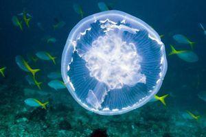 Ko te ožge meduza. Pomaga sladka ali slana voda?